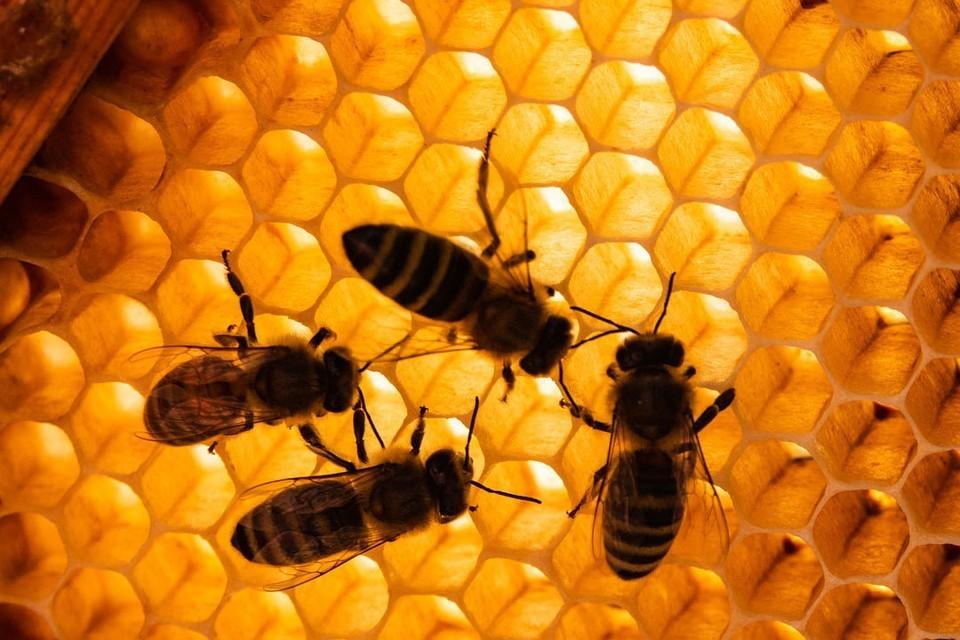 Пчел губит китайская химия