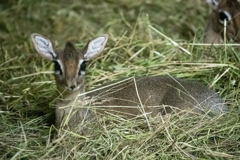 Вы только посмотрите, какая улыбка! Фото: предоставлено новосибирским зоопарком.