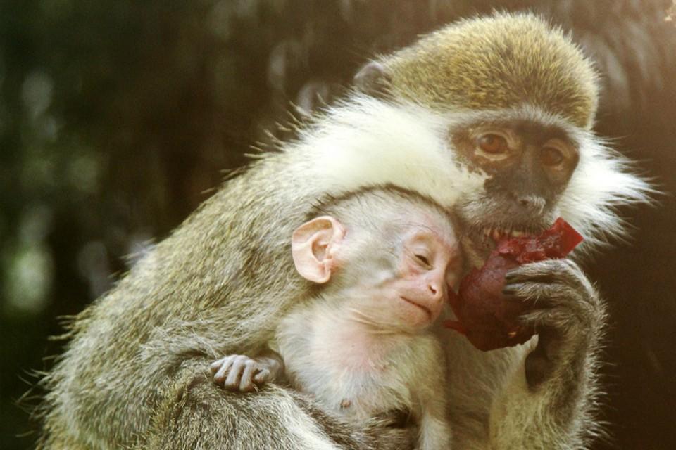Фото: пресс-служба Екатеринбургского зоопарка