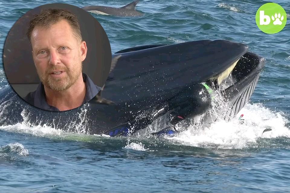 Дайвер Райнер Шимпф оказался в пасти кита. Фото Barcroft Animals Youtube