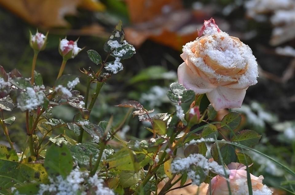 В выходные в Коми придут заморозки. А на календаре еще лето.