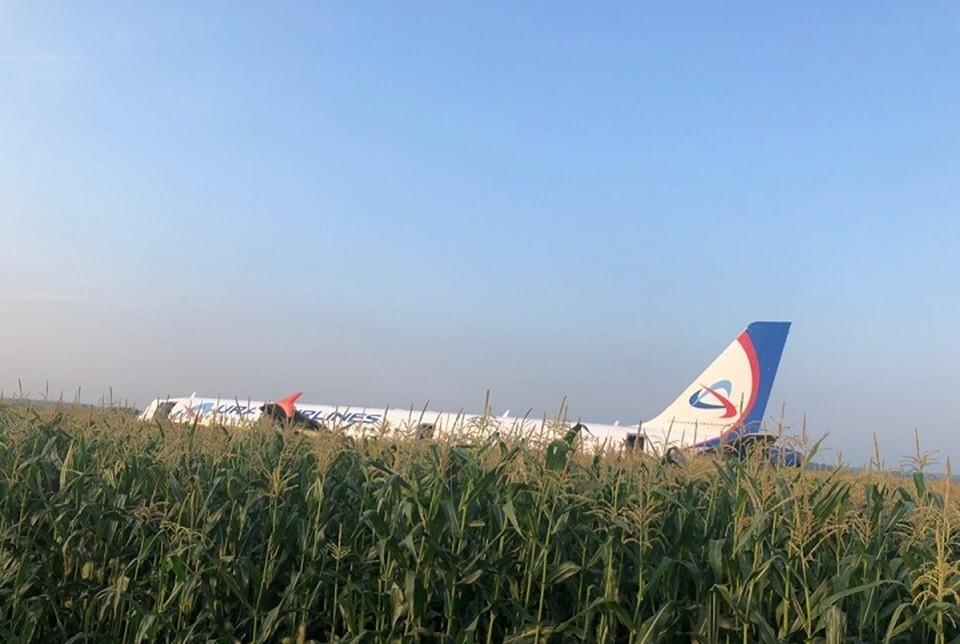 Борт посадили прямо в поле. Фото: Ольга Шаврова