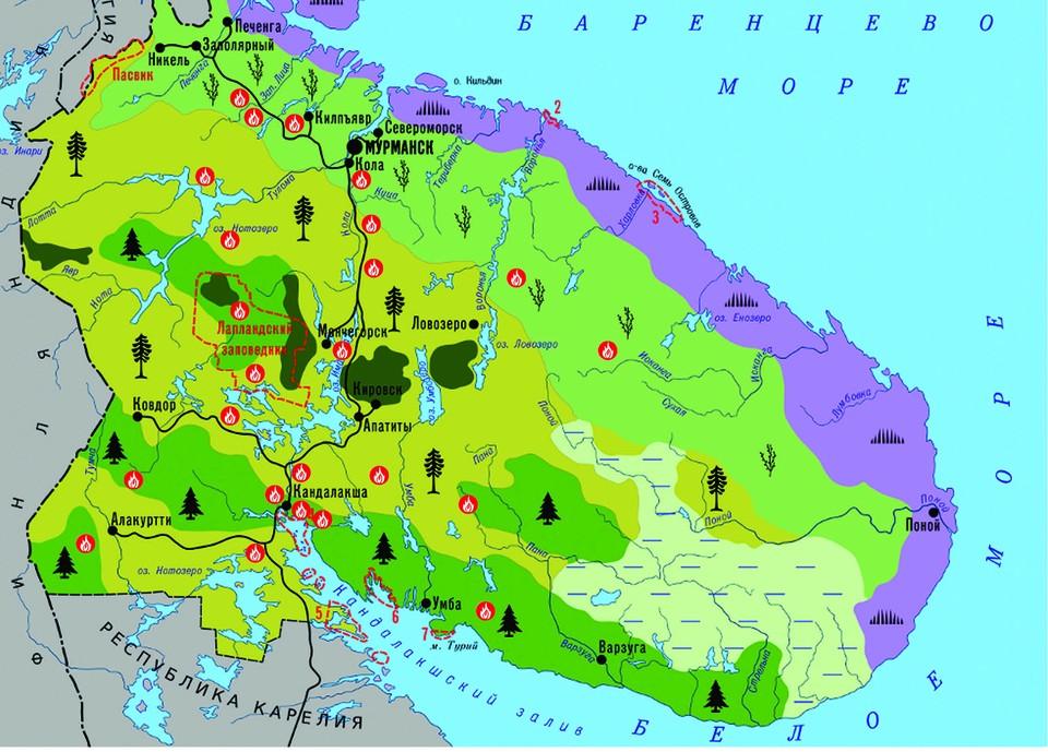 За этот сезон в Мурманской области произошло 23 лесных пожара. Фото:Ирина Северина