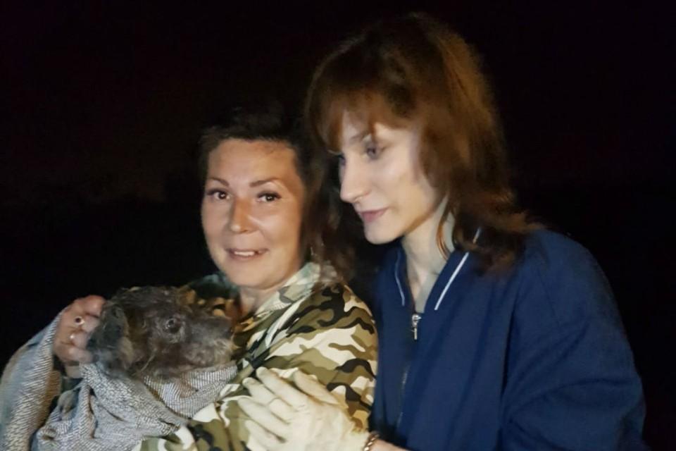 Собака просидела в камышах около двух суток. Фото: приют для животных «Друг».