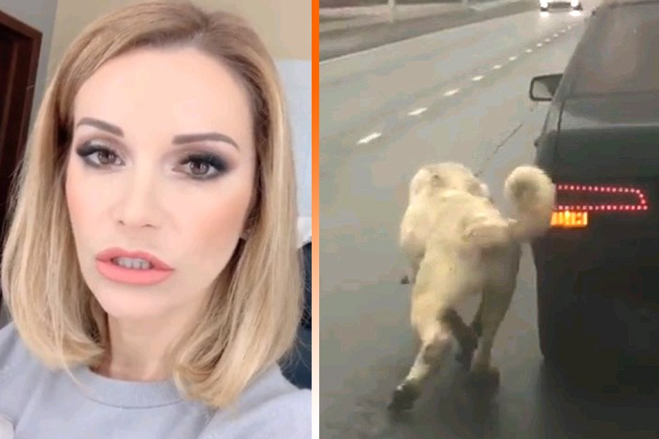 Узнав о случившемся, Ольга Орлова бросила все дела и приехала на Киевское шоссе, где заметили привязанного к движущемуся авто пса.