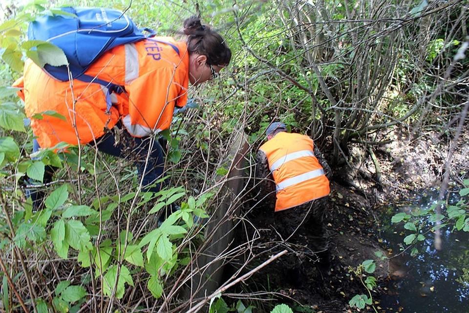 Поиски шестилетней Алины, потерявшейся в лесу в Ленобласти, завершены. ФОТО: Лиза Алерт
