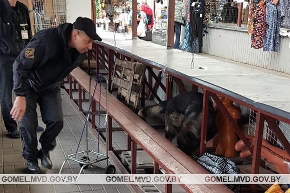 Овчарка нашла психотроп на центральном рынке Гомеля. Фото: УВД Гомельского облисполкома.