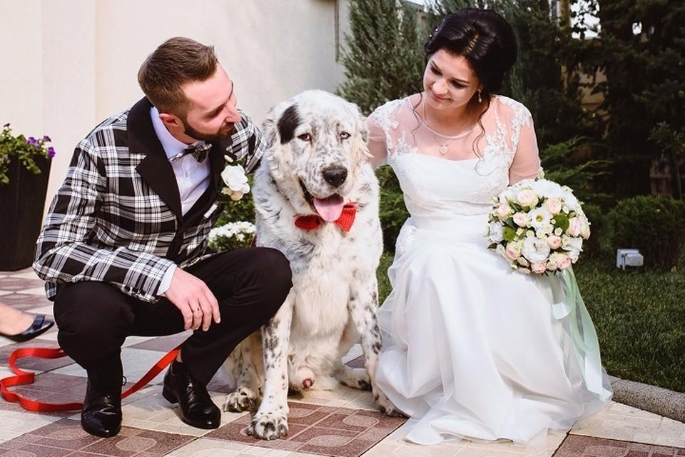 Яна и Саша очень любят животных, поэтому алабай на свадьбе был кстати. Фото: Личный архив семьи Деминых
