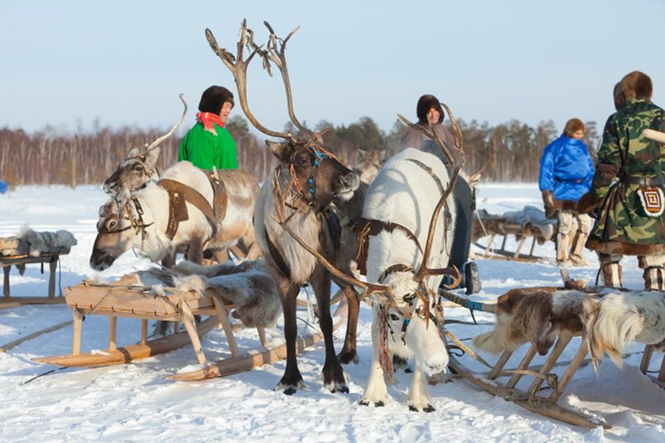 Якутским оленеводам предстоит преодолеть тысячи километров до дома из-за 500-рублевого штрафа