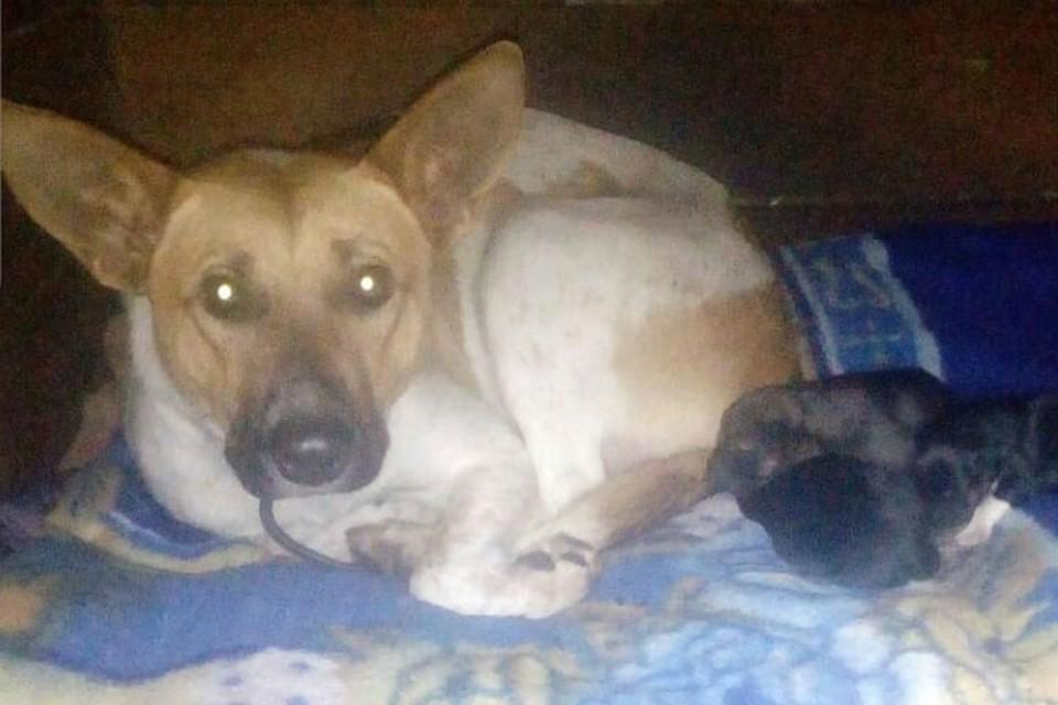 Дети кидали в щенков камни и палки: над рожающей собакой и детенышами издевались в Братске. Фото: bezdomyshi_bratsk.