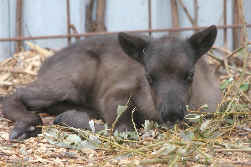 Фото: зоопарк Удмуртии