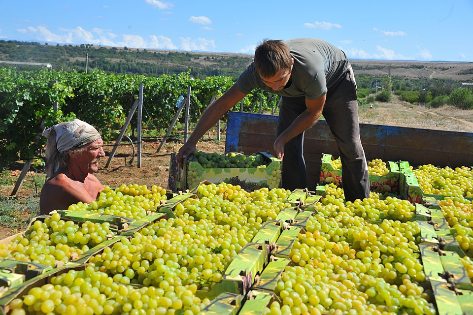 Российского виноделия без российского виноградарства быть не может, все остальное - профанация