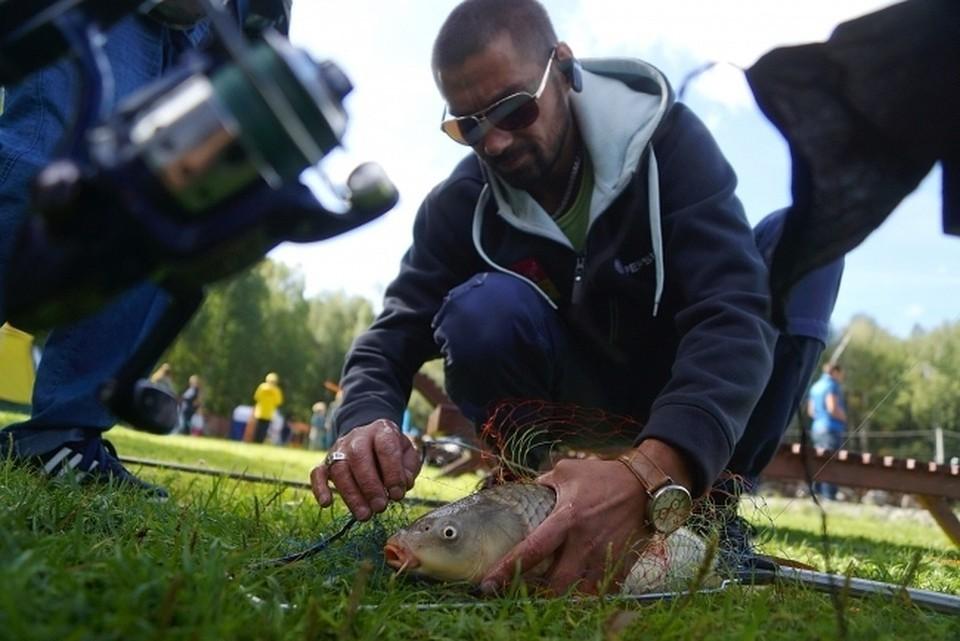 Жители Самарской области летом были очень обеспокоены судьбой рыбы в Волге