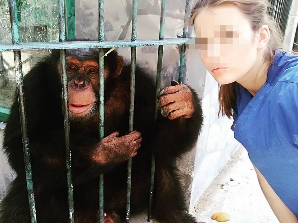 До трагедии девушка много раз общалась с этим шимпанзе и агрессии он не проявлял.
