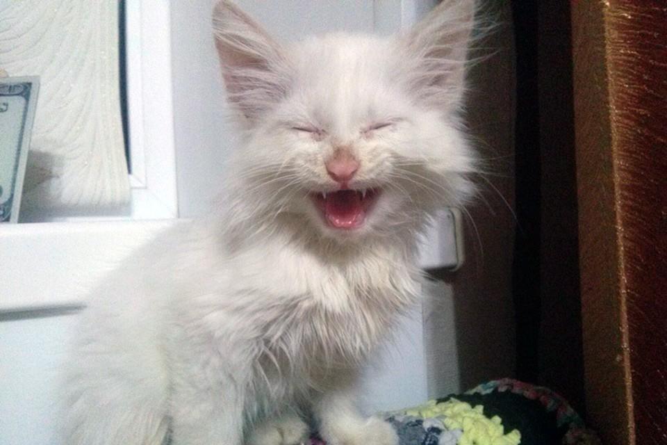 Смеющийся котенок из Копейска. Фото: Евгения Устинова, соцсети.
