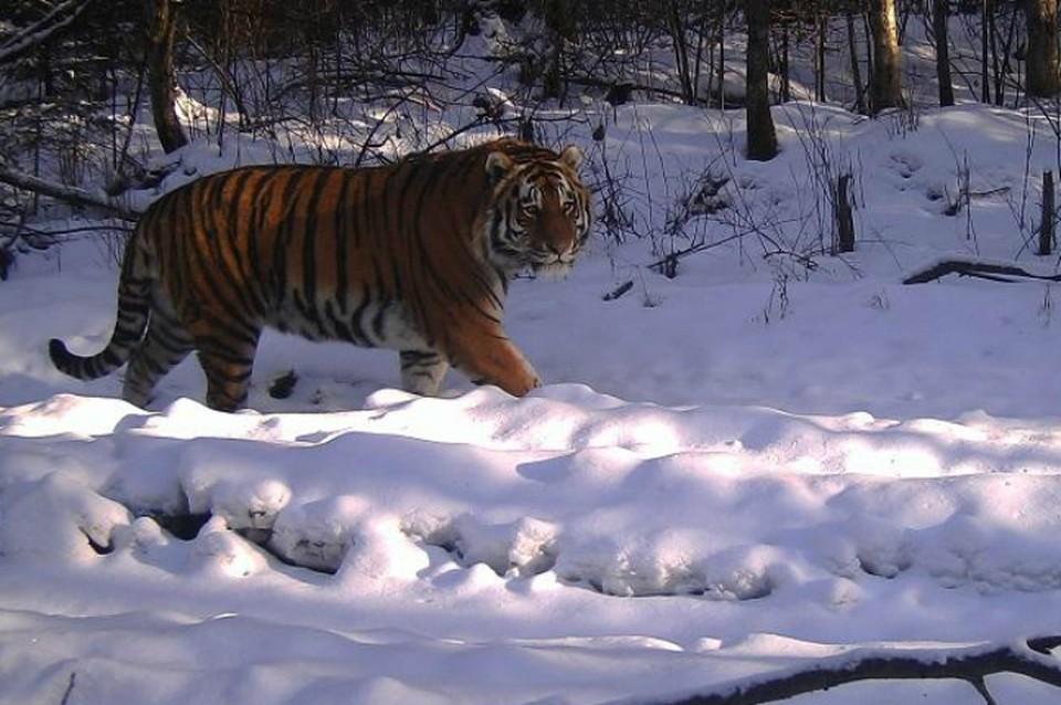 Дикие звери из заповедника в ЕАО стали звездами национального конкурса ФОТО: Заповедник «Бастак»
