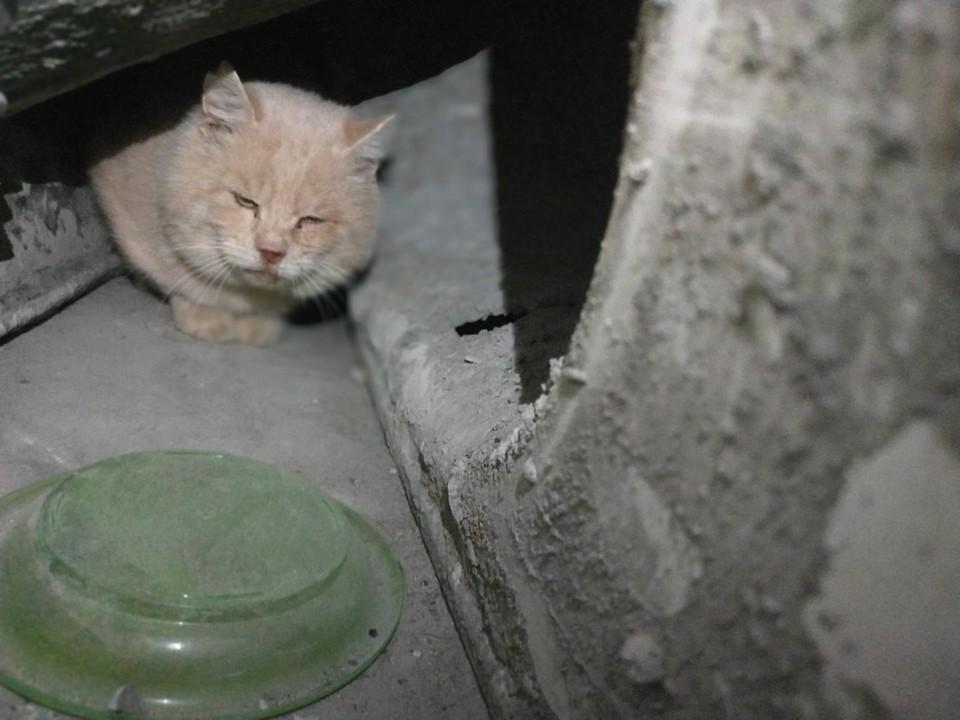 Несчастное животное закрыли в коробке