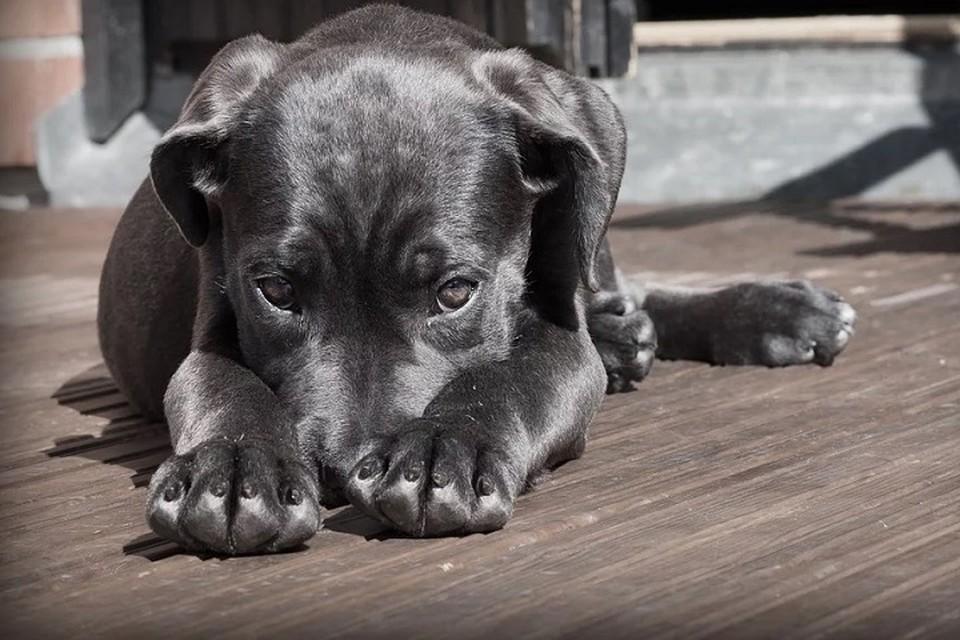 Лабытнангцы голосованием выбирают название для нового приюта для собак Фото: pixabay.com