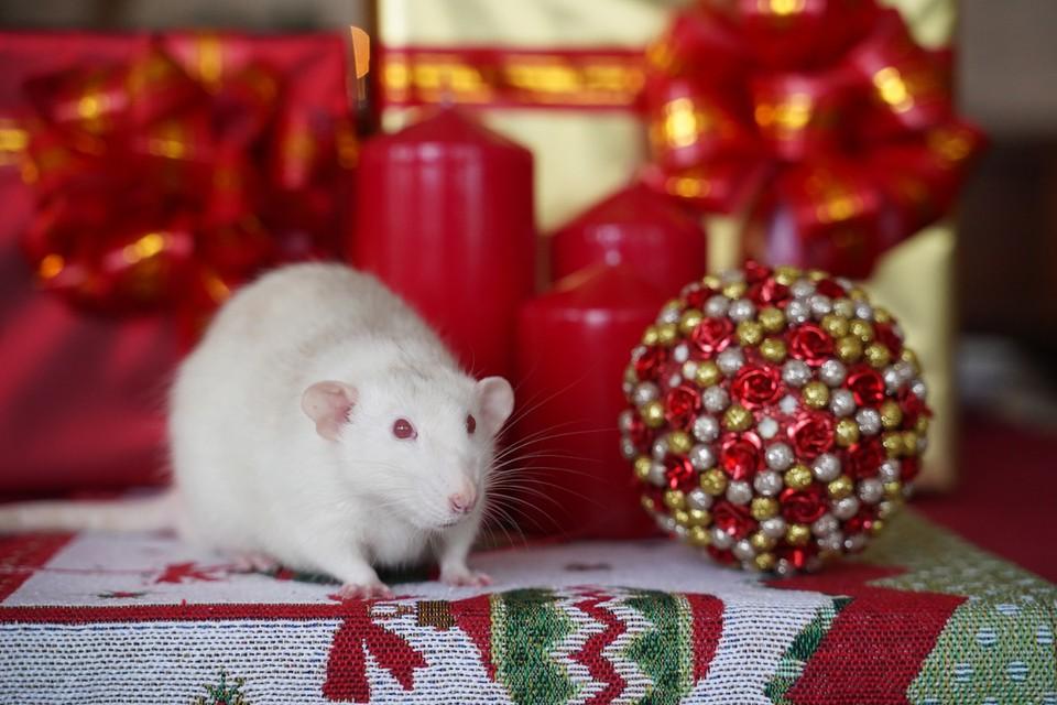 По восточному календарю 2020 год будет годом Белой Металлической Крысы.