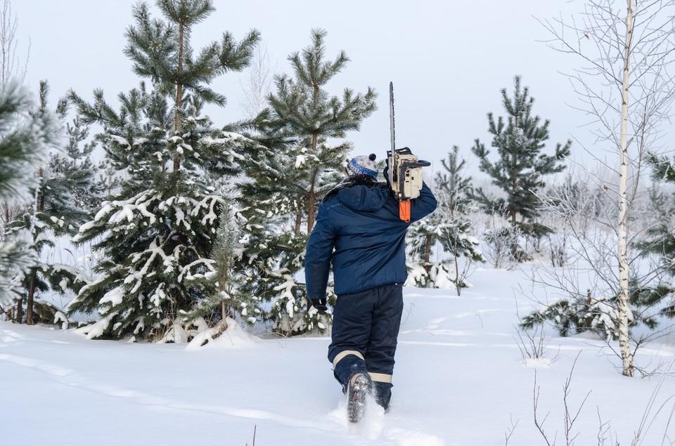 Раздобыть праздничное дерево можно на елочном базаре или в лесу.