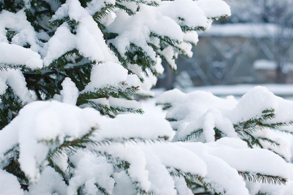 Почти каждый день в январе в Кирове будет идти снег. Фото: pixabay.com