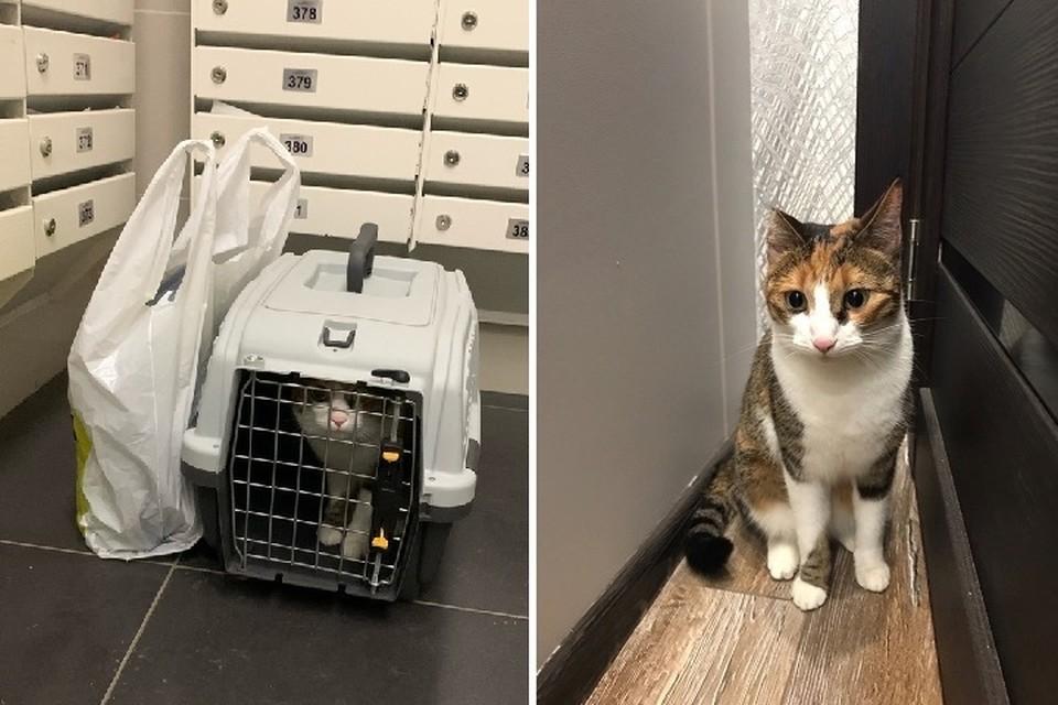 Выброшенной в подъезд кошке из Мурино нашли новых хозяев. Фото: vk.com/unreleased_dtp