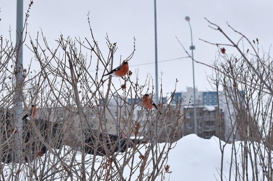 """Погода в Югре 5 января 2020 года: тепло и ветрено. Фото из группы """"Привет, сей час Нижневартовск"""" во """"ВКонтакте"""""""
