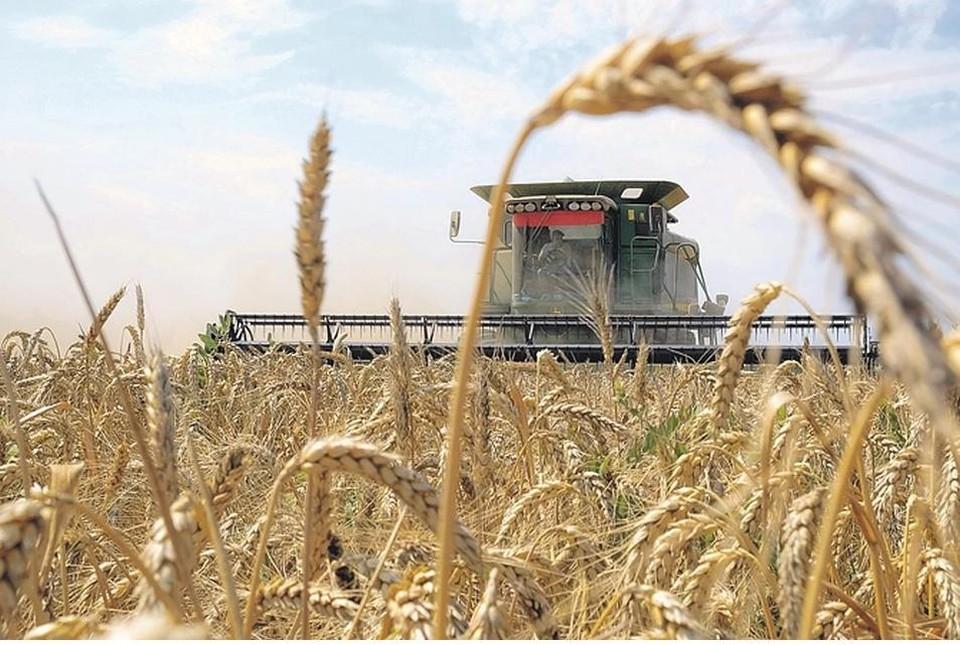 Нижегородские фермеры могут рассчитывать на гранты до 6 млн рублей