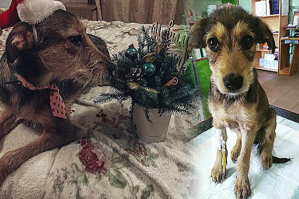 Добрая история воодушевляет волонтеров еще больше помогать животным!
