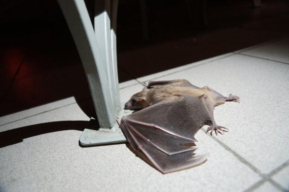По одной из версий, эпидемия началась с «мокрого» рынка в китайском городе Ухане, на котором кто-то купил зараженное мясо летучих мышей.