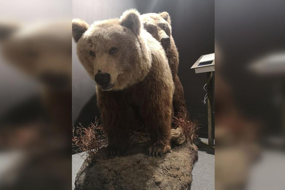 Зоологию дети проходят в седьмом классе, а на выставке представлена лишь часть этой темы, по мнению автора. Фото: vk.com/kazdoytvaripopare