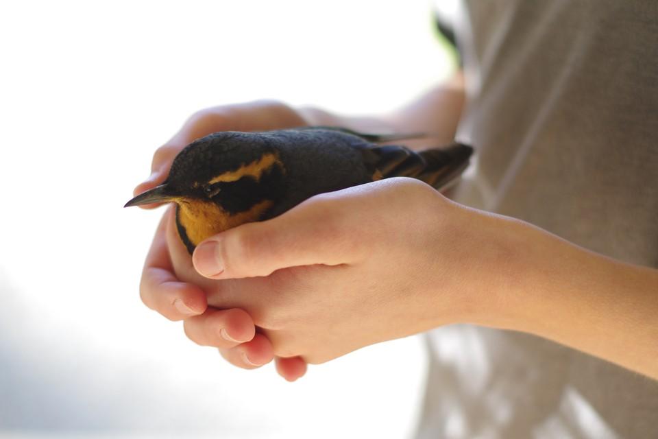 В «Дом птиц» жители Калининграда смогут приносить раненых птиц. Фото: shutterstock.com
