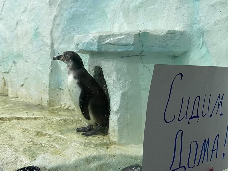 По домам сидят даже пингвины в океанариуме