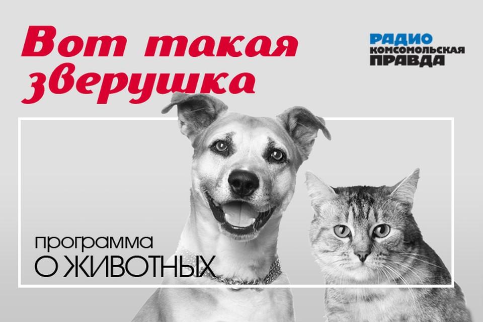 Бесплатная консультация ветеринарного врача