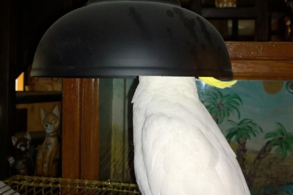 Попугай – в светильнике, мышь – в трубе, рыбка – в черепе: как звери в Иркутском зоопарке самоизолировались из-за коронавируса