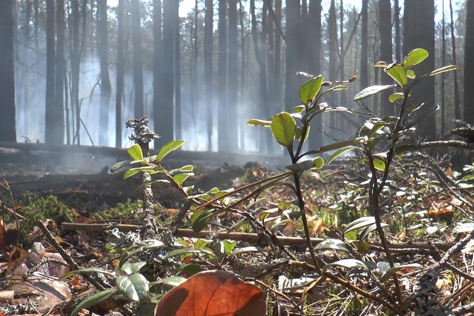 В Чернобыльской зоне Украины горят леса. Фото: dsns.gov.ua