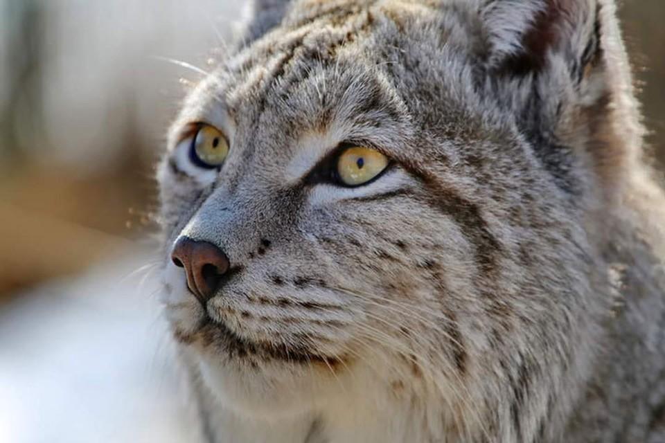 На попечении фонда находятся 34 вида животных, всего 180 особей.