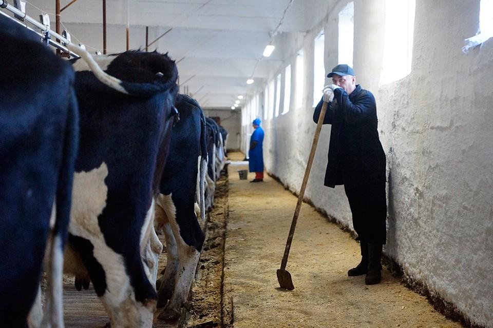 Всего фермеры выделили 5 основных пунктов