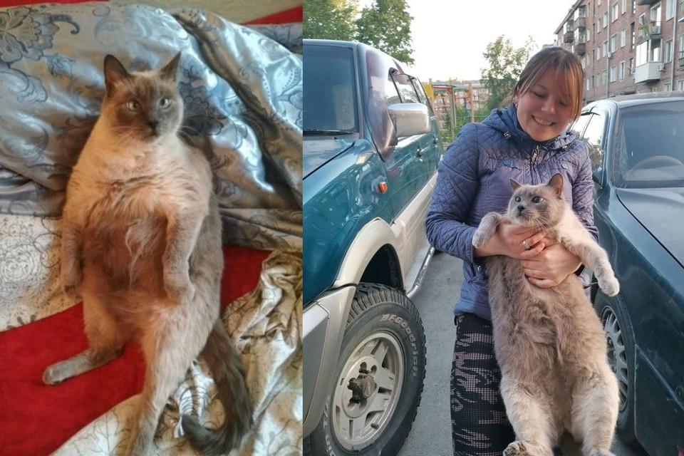 Аппетит у Ляли очень хороший: сейчас котик весит 10 килограммов. Фото: личный архив.