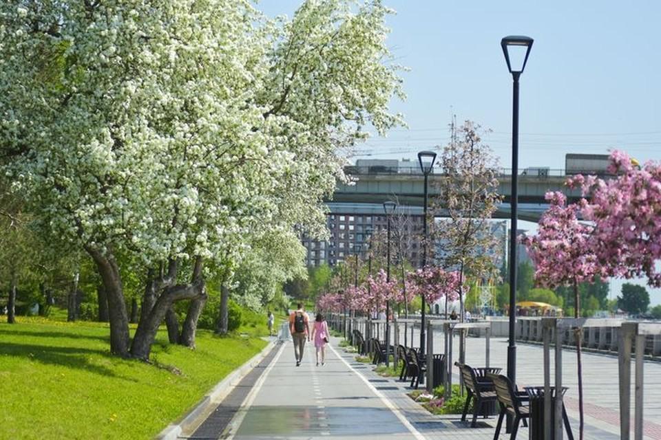 Празднование Дня города в Новосибирске в этом году не будет.