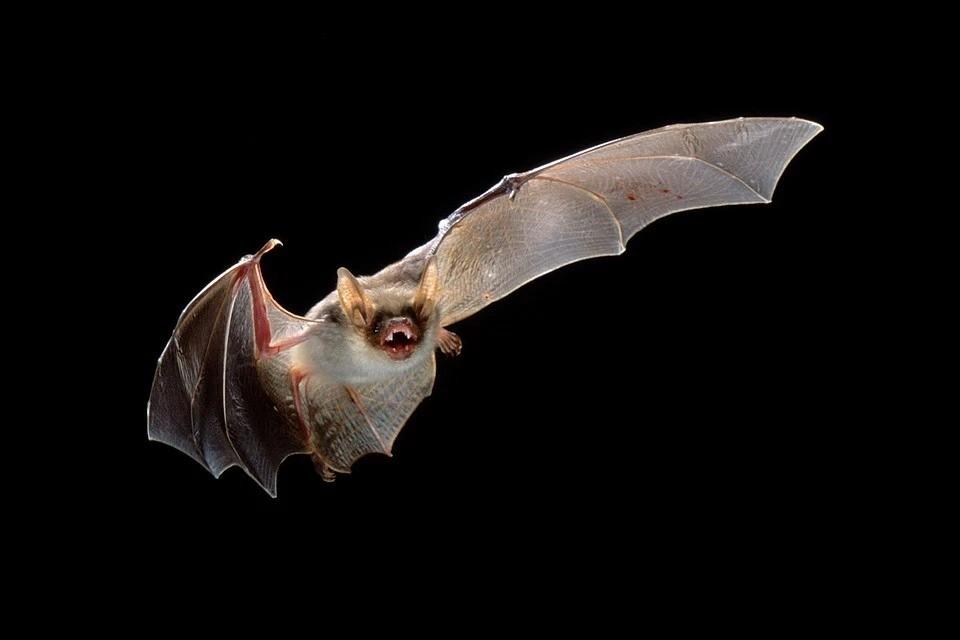 Специалист говорит, что для человека летучие мыши не опасны. Фото носит иллюстративный характер