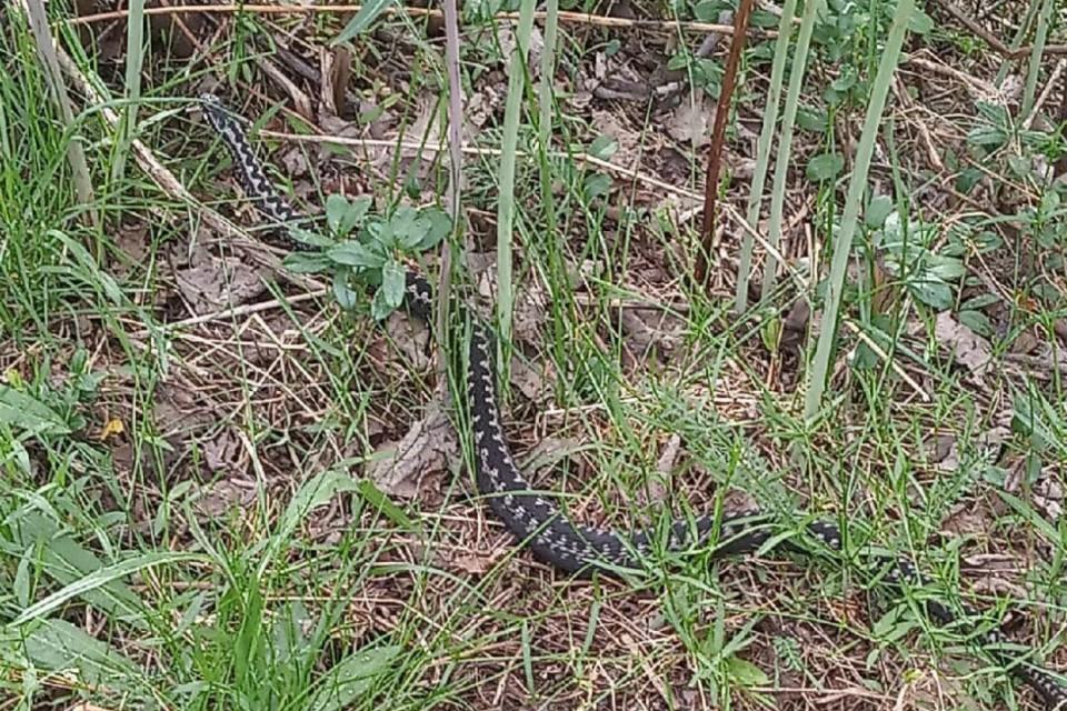 Змея вылезла погреться на солнышке. Фото: vk.com/kandaone