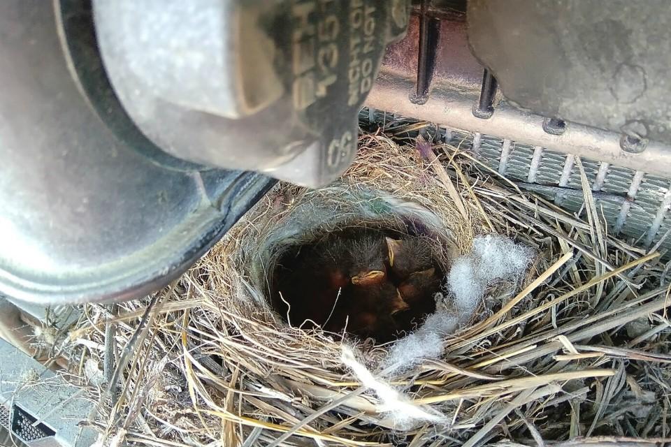 Птички хорошо устроились в грузовике. Фото: Владимир Кокотов