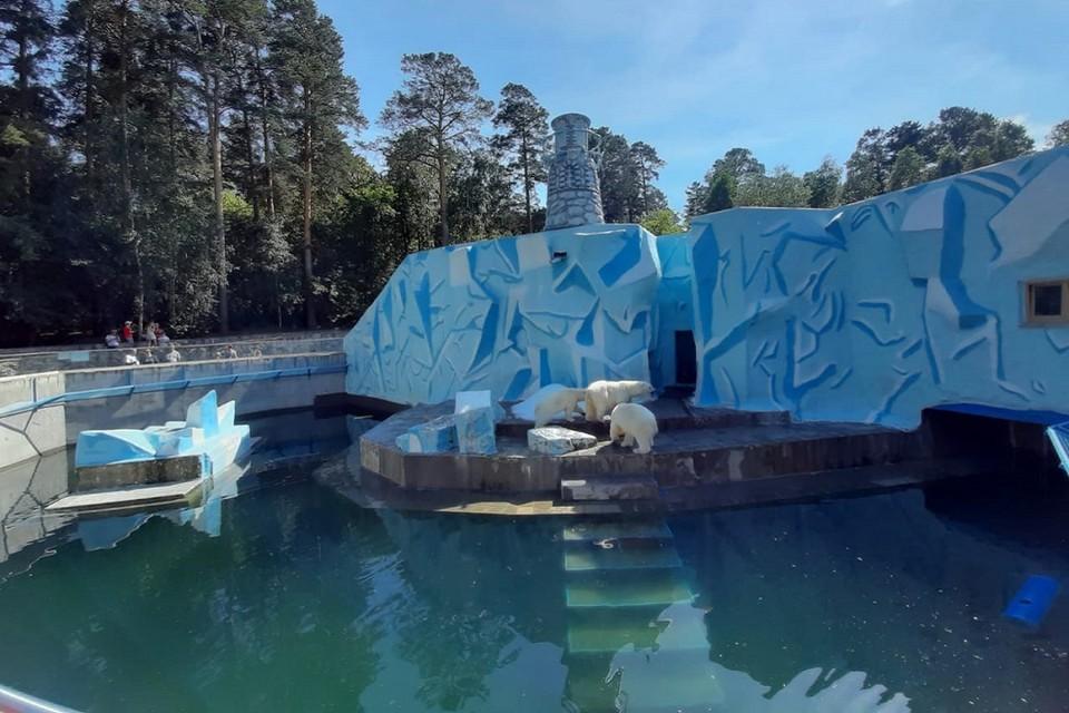 Сибиряков напугала позеленевшая вода в медвежьем бассейне. Фото: Ольга Пет.