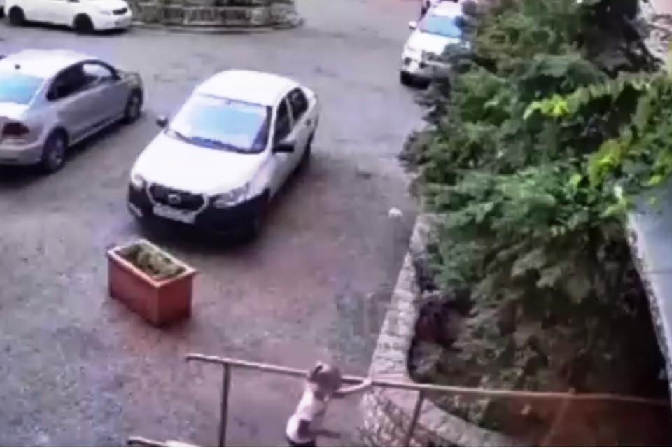 За секунду до падения бутылки. Фото: кадр из видео.