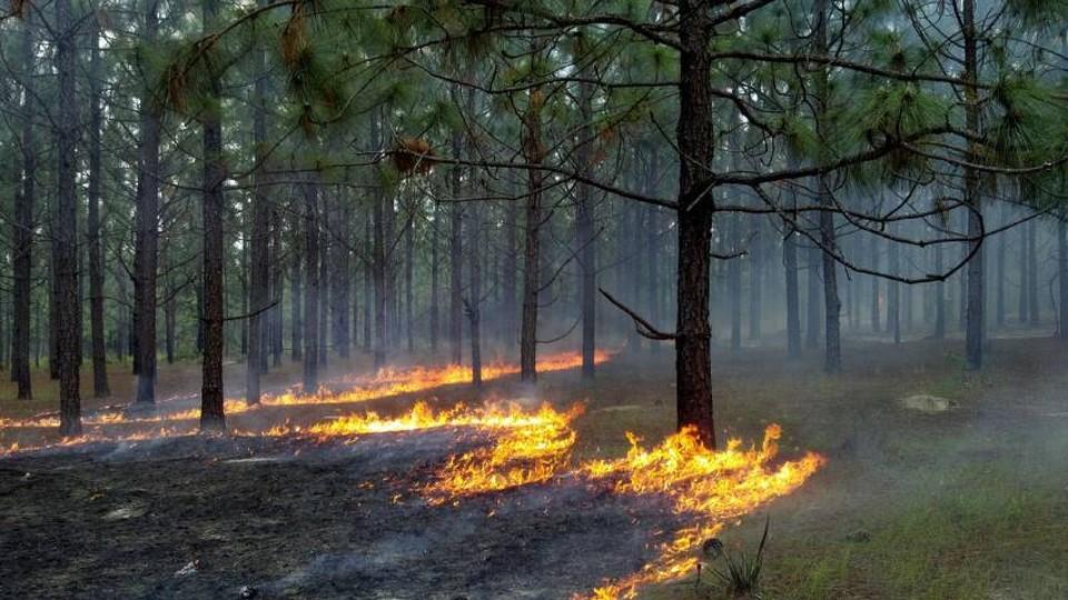 В крае объявлена повышенная пожароопасность . Фото ГУ МЧС по КК