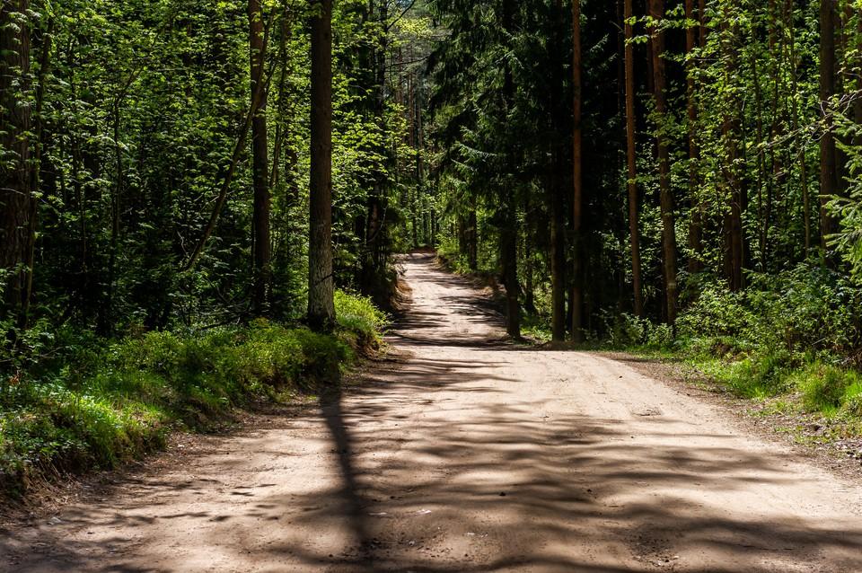 Петербуржцам запретили ходить в городские леса до 26 июля.