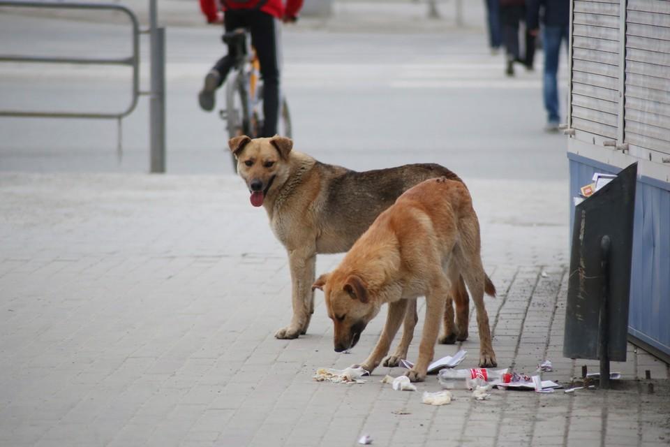Местные жители уверяют – это не первый случай нападения собак.
