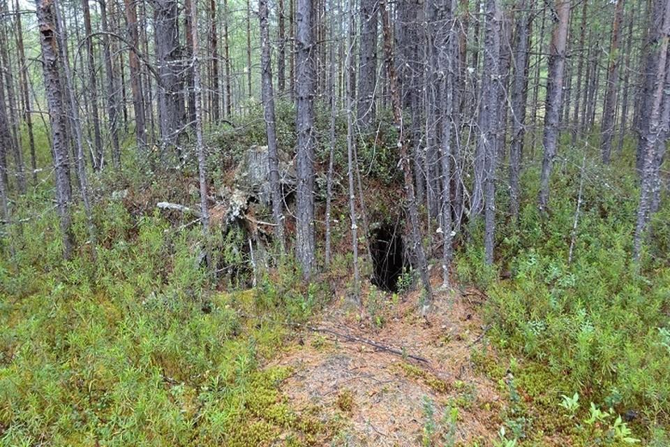 В природном парке «Кондинские озера» случайно обнаружили берлогу медведя