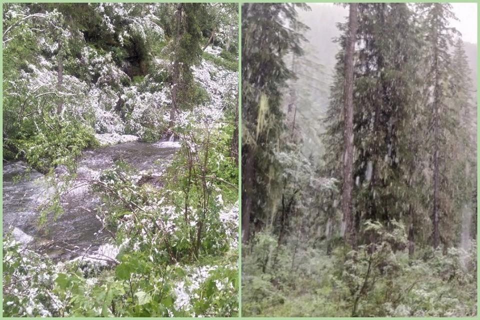 В разгар лета в Красноярском крае выпал снег. Фото: С. ФОМИН, Саяно-Шушенский заповедник.
